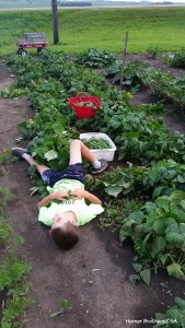 Picking green beans can literally be exhausting.
