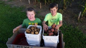 Potato Harvest is in full swing.