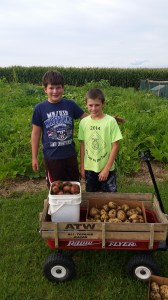 The boys were busy teaching friends how to dig potatoes. A skill both boys take for granted.