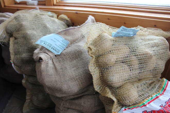 4-15-18 seed potatoes