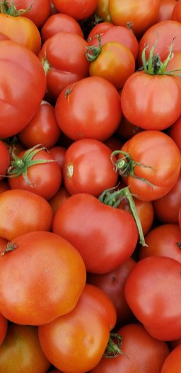 Fourth of July tomatoes