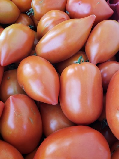 Big Mama tomatoes - Plum-shaped and enormous, Big Mama Hybrid tomatoes grow up to 5 in. (13-cm) long and 3 in. (8 cm) across. In the kitchen, this variety is easy to peel and core. One of the best paste tomatoes, Big Mama is excellent in sauces. These tomatoes need at least one inch (2.5 cm) of water per week and prefer six hours or more of direct sun each day.