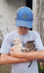 I think the boys are doing a good job with the kittens. They come running to us when we come out the door.