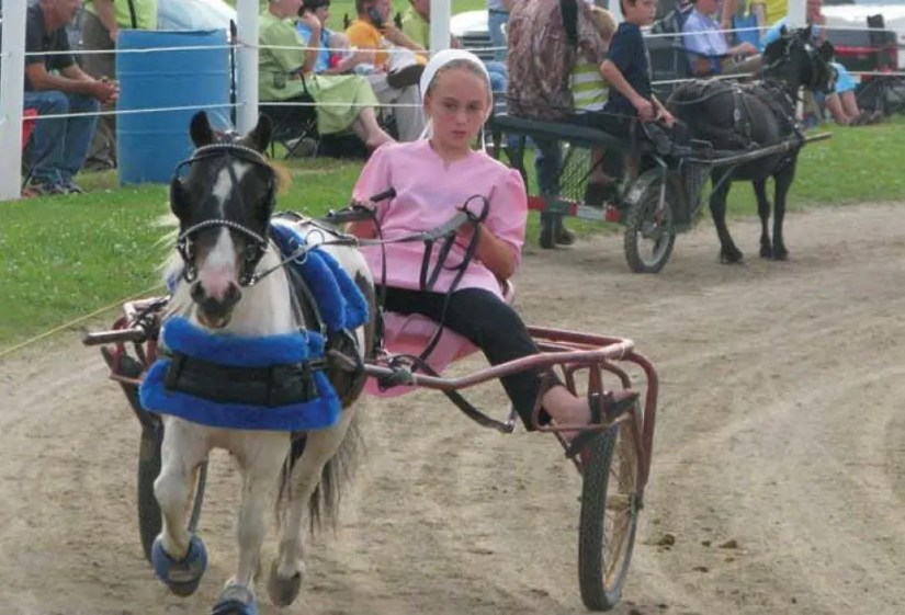 At Nappanee Raceway, Little Horses Put On a Big Show
