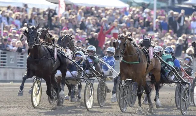 Nuncio and Örjan Kihlström (left) took the lead with 100 meters to go, and held off his U.S. counterpart Resolve at the wire to win the Elitlopp on Sunday at Solvalla | Kanal75