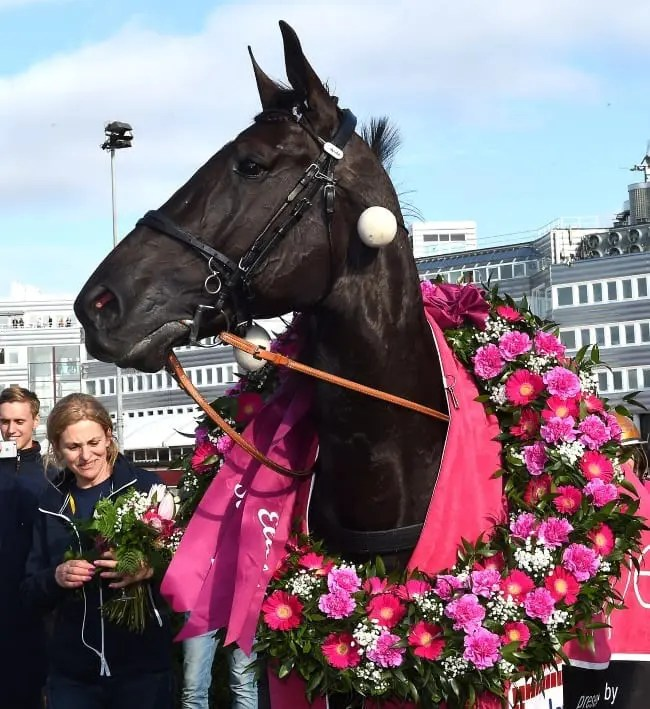 Courtesy Kanal75 From Hanover to Stockholm with love. Nuncio, bred by Russell Williams of Hanover Shoe Farms fame, was the toast of Solvalla Sunday after winning the Elitlopp | Kanal75
