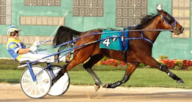 Lil' Day Drinkin (with trainer/driver Walter Haynes, Jr. in the bike) has won seven of 12 starts this year in Indiana | Linscott Photo