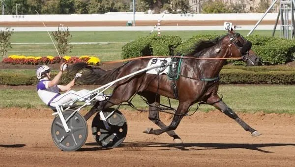 Always B Miki and David Miller recorded the fastest mile in harness racing history when they won the $138,000 Allerage Farms open pace Saturday at Red Mile in 1:46.   Nigel Soult