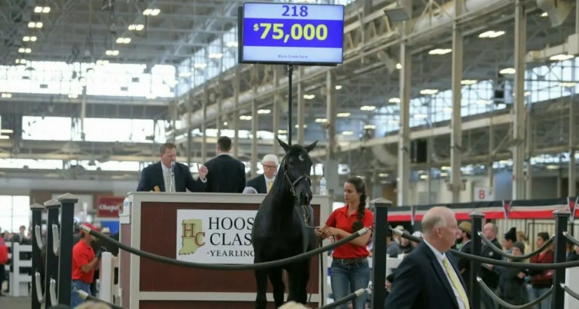 Sale topper Au National Herbie is a black Here Comes Herbie colt out of Ljanearl.   Dean Gillette