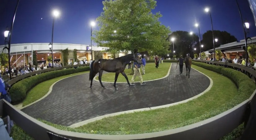 It was the third huge night in a row at the Lexington Selected Yearling Sale. | Dave Landry