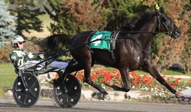 Hannelore Hanover (Yannick Gingras) appears to be a lock to win the older trotting mare division title.   New Image Media
