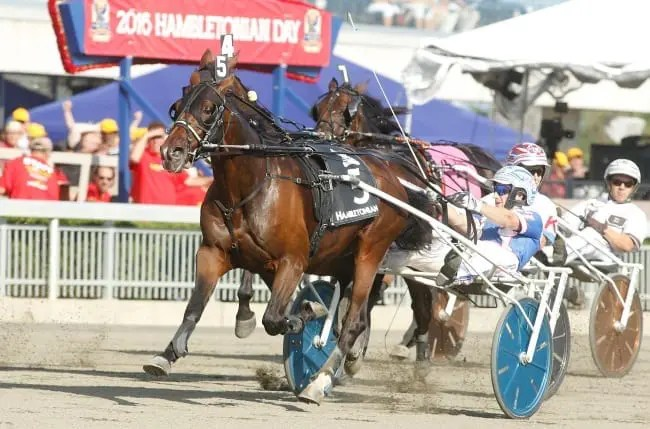 Trotting Triple Crown winner Marion Marauder (shown winning the Hambletonian with Scott Zeron) scoped sick after finishing last in last Saturday's Breeders Crown final for three-year-old trotting colts.   Dave Landry