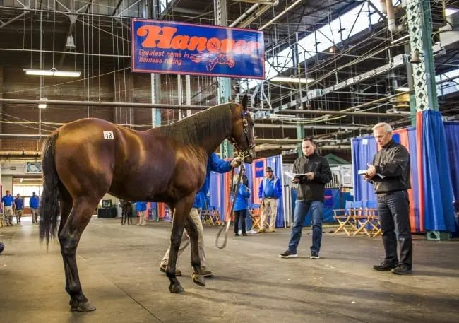 Hanover Shoe Farms led all consignors with gross sales of more than $10 million. | Ryan Randolph
