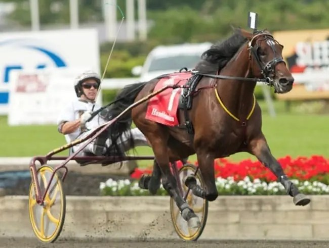 Stallion shares for the great trotter Muscle Hill sold for $175,000 and $170,000, respectively, which is believed to be a record. | Dave Landry
