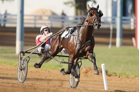 Somebeachsomewhere (with Paul MacDonell) continued his siring dominance at Harrisburg. | Dave Landry