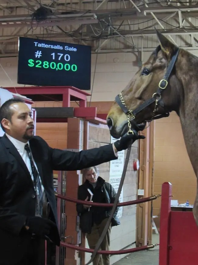 The sale topper was Dr J Hanover, who fetched $280,000 from Tony Alagna to dissolve a partnership.