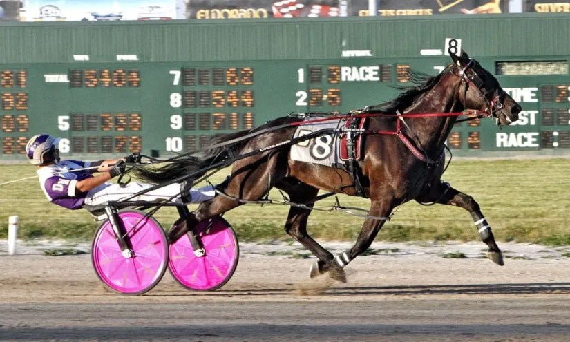 Drunk On Your Love established a new lifetime mark of 1:51.2 at Scioto Downs on June 10. The Foreclosure N gelding leads the Ohio Sire Stakes points standings after two legs | Brad Conrad
