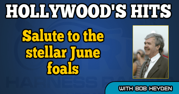 Salute to the stellar June foals