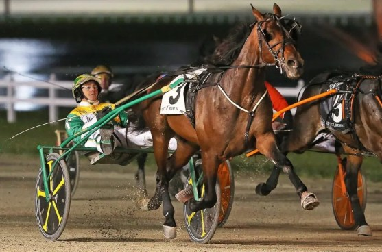 Claus Andersen Fiftydallarbill (Trace Tetrick) winning the Breeders Crown 2-year-old colt trot on home turf at Hoosier Park in 2017.