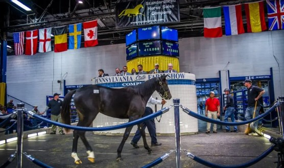 Triscari Video Web and Marketing | The second-highest yearling sold was Krickan, a daughter of Trixton out of Solveig purchased by John Floren for $415,000.
