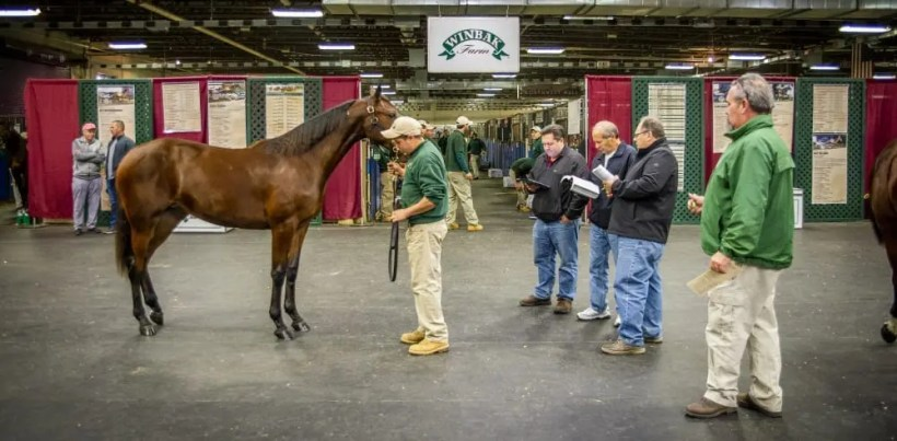 Triscari Video Web and Marketing | Winbak Farm(showing yearlings under the watchful eye of yearling manager Jimmy Ladwig (right)) bred the Wednesday session topper, a Chapter Seven colt out of Tantalizing Donna that sold to Stroy Inc. for $157,000.