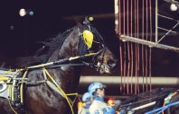 Chris Gooden Photos | Foiled Again going behind the gate for the final time.