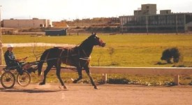 Courtesy Graham family | What is believed to be the late Ron Graham jogging a horse at Tartan Downs.