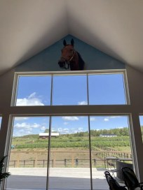 Beloved mare Delicious overlooks the lounge and farm.