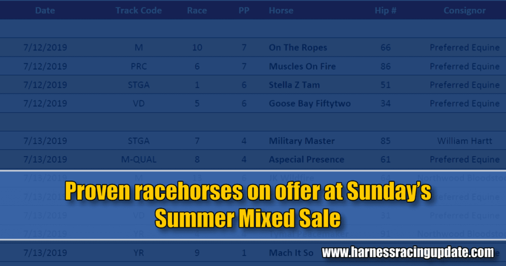 Proven racehorses on offer at Sunday's Sumer Mixed Sale