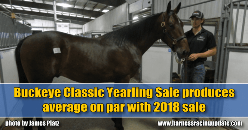 Buckeye Classic Yearling Sale produces average on par with 2018 sale