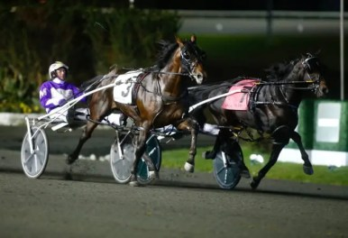 Dave Landry | Papi Rob Hanover (3, David Miller) and Tall Dark Stranger (7, Yannick Gingras) battling to the wire in the Breeders Crown 2-year-old colt pace final Friday at Woodbine Mohawk Park.