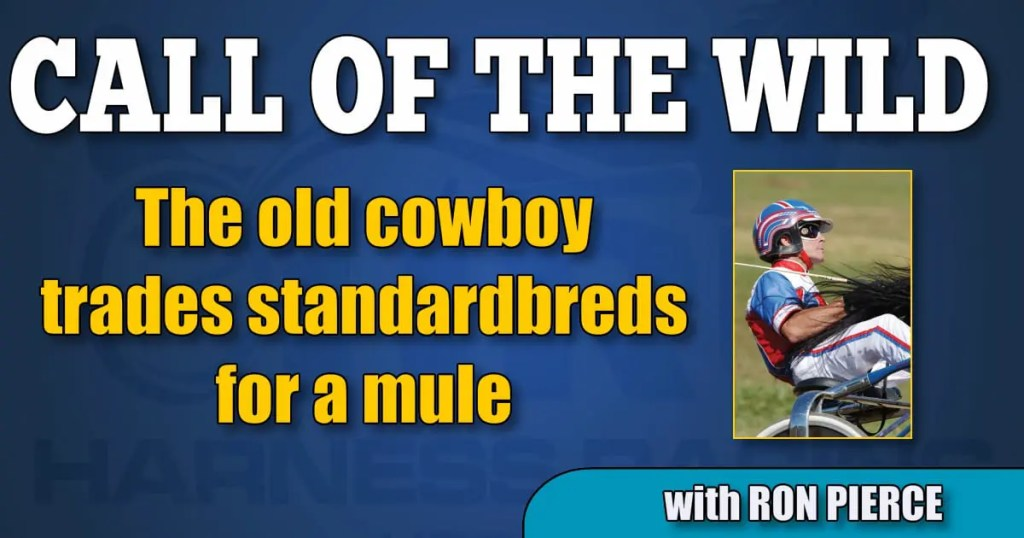 The old cowboy trades standardbreds for a mule