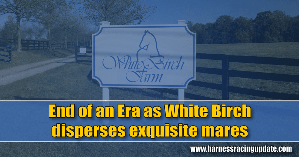 End of an Era as White Birch disperses exquisite mares