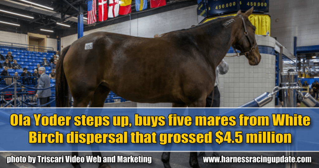Ola Yoder steps up, buys five mares from White Birch dispersal that grossed $4.5 million