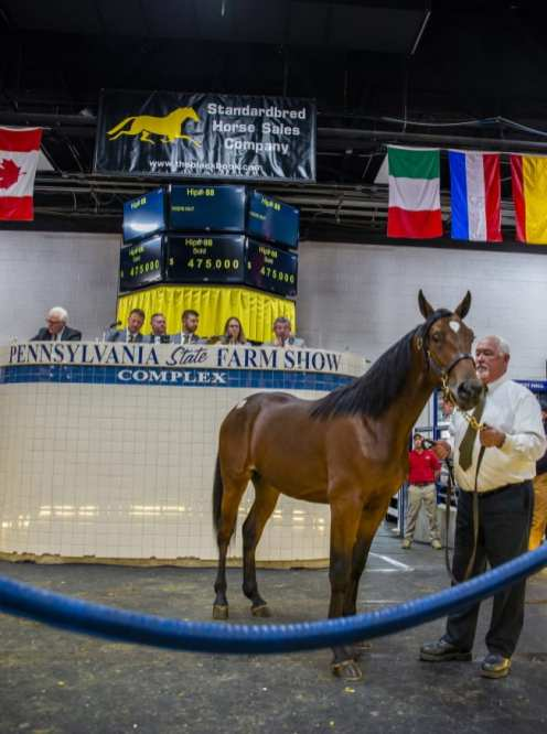 Triscari Video Web and Marketing | Hip 88 Take This Society (c, Muscle Hill—Thasnotmyname) sold to Diamond Creek Farm for $475,000.