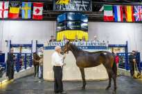 Triscari Video Web and Marketing | Hip 45 Gangsta Rat, a Muscle Hill filly out of Order By Wish, topped the opening session when she sold to Ake Svanstedt for $550,000.
