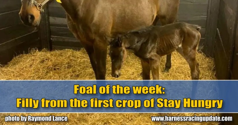 Filly from the first crop of Stay Hungry