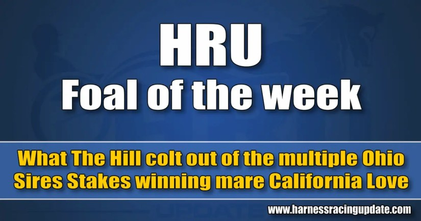 What The Hill colt out of the multiple Ohio Sires Stakes winning mare California Love
