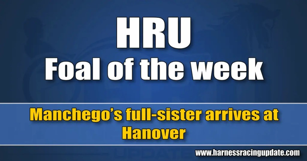 Manchego's full-sister arrives at Hanover
