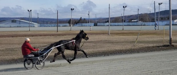 Brad McCallum | Sunny Billion on the track at Truro.