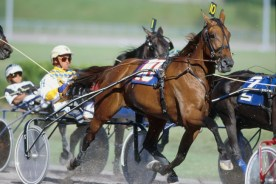 Dave Landry | The late, great Moni Maker (shown in her last pari-mutuel start in Montreal in 1999 with her regular driver Wally Hennessey) took the Moni Maker Stable around the world and showed them that combining French and American blood had the potential to produce a better standardbred.