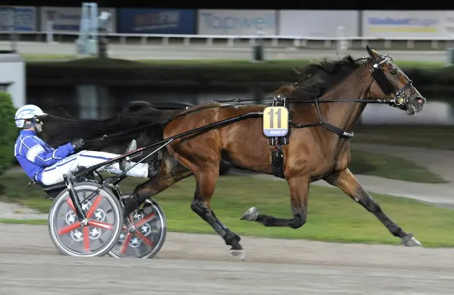ALN | Googoo Gaagaa gelding Bythebook (Erik Adielsson) is one of five finalists in Sunday's Swedish Derby for 4-year-olds with pacing blood.