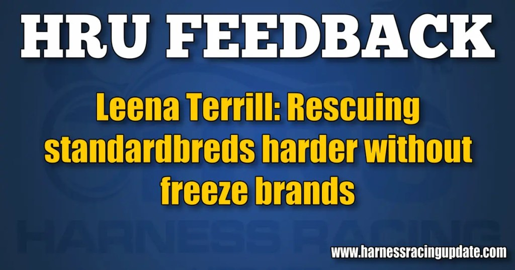 Leena Terrill: Rescuing standardbreds harder without freeze brands