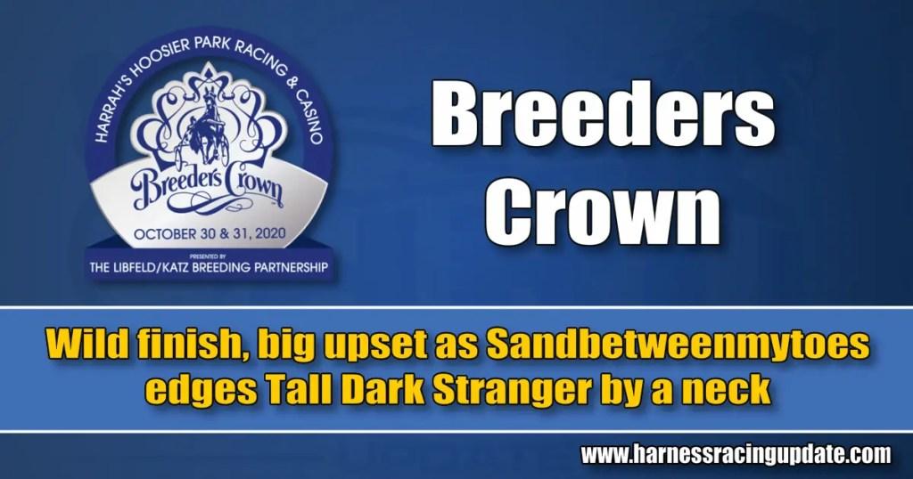 Wild finish, big upset as Sandbetweenmytoes edges Tall Dark Stranger by a neck