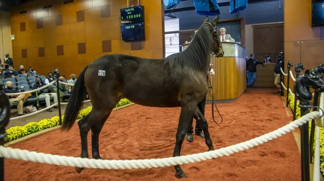 Triscari Video Web and Marketing | Hip #178 Peerless Hanover, a Cantab Hall filly out of Perfect Chance, sold to Trond Smedshammer for $150,000.