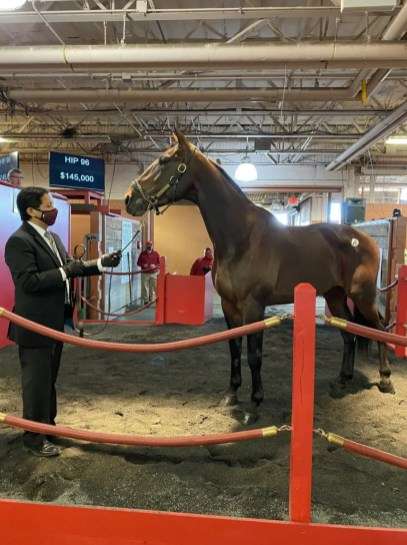Kelle Wisker | King Alphonso was the fourth highest-priced horse to sell. Matt Morrison of Indiana, PA paid $145,000 to acquire the 4-year-old Muscle Hill horse out of Amour Heiress.