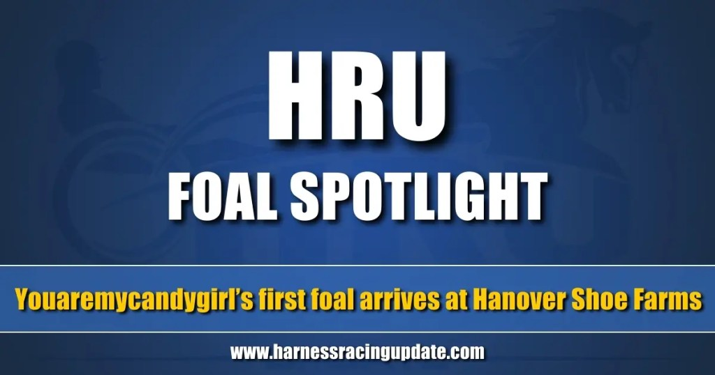 Youaremycandygirl's first foal arrives at Hanover Shoe Farms