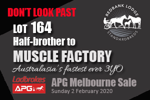 Muscle Factory half brother for sale