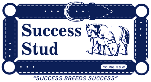Harness-racing-success-stud