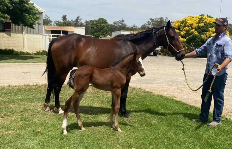 Zenable-and-Sweet-Lou-Filly-Crop